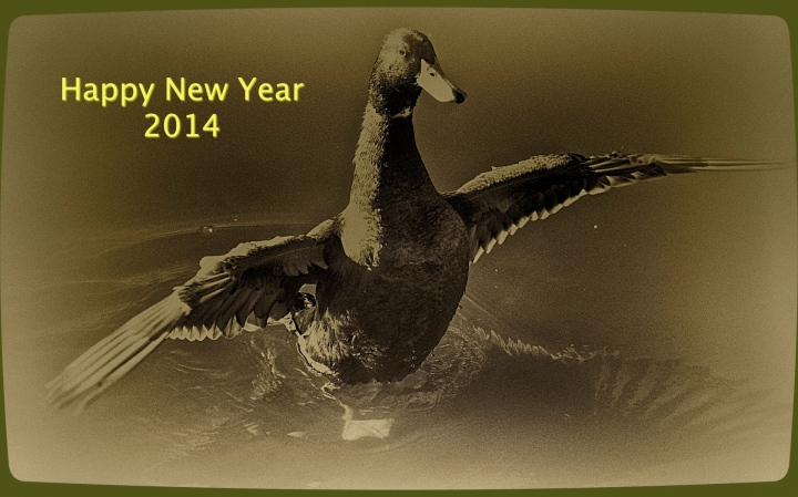 Duck Happy New Year