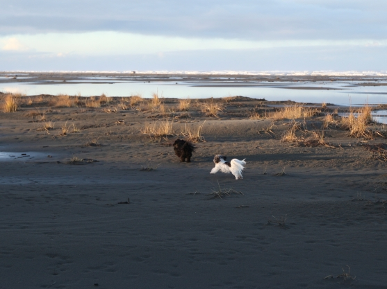 max and cassie beach